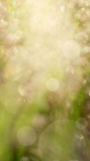 Defocused image of plant