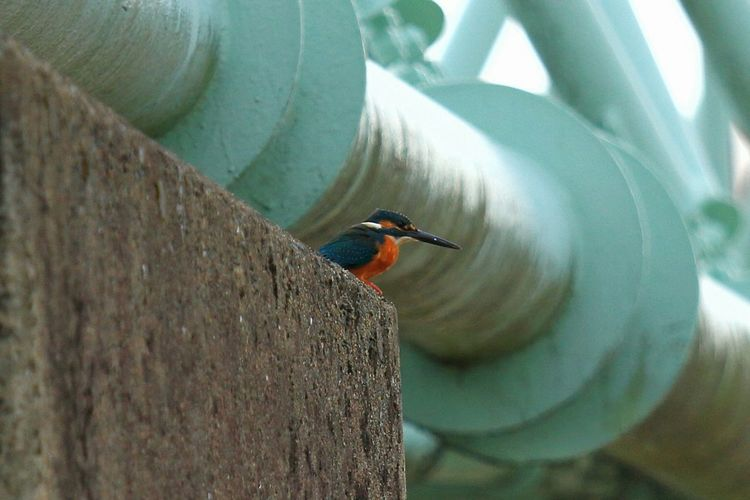 Low angle view of kingfisher on wall