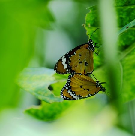 Insect Animals In The Wild Butterfly - Insect No People Animal Themes Leaf Nature Animal Wildlife One Animal Close-up Outdoors Fragility Beauty Beauty In Nature Day Perching Freshness