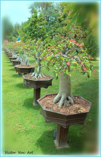 EyeEmNewHere Thailandia 2016 Nong Nooch Tropical Bothanical Garden Pattaya City Victor Noc Art VicNocArt VittNoc VicNoc 8 88 888 8888 Otto OttoOtto OttoOttoOttantotto Pattaya City Sfumature