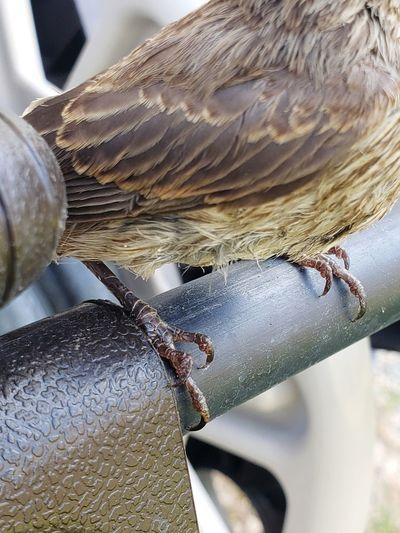 Sparrow Talons