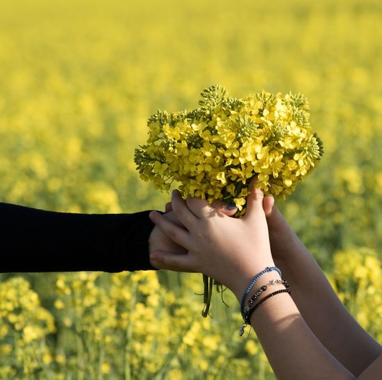 Low angle view of person hand holding yellow flower on field