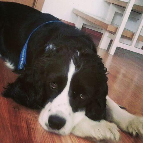 Der liebste Bob der Welt 🐶😍💞 Cutepet Cutepets Cutepetsofinstagram Cutepetclub Petsofinstagram Dogsofinstagram Dogsofinsta Dogsofinstaworld Bestdog  Bestdogoftheworld Bob Mydog Dog Dogs