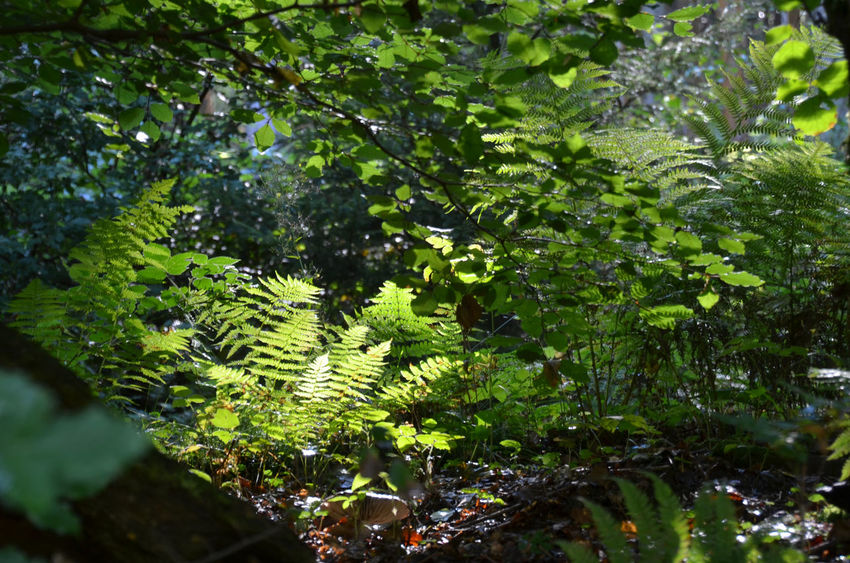 Beauty In Nature Botany Close-up EyeEm Nature Lover Green Growth Leaf Nature Plant Sauerland Shadows & Lights