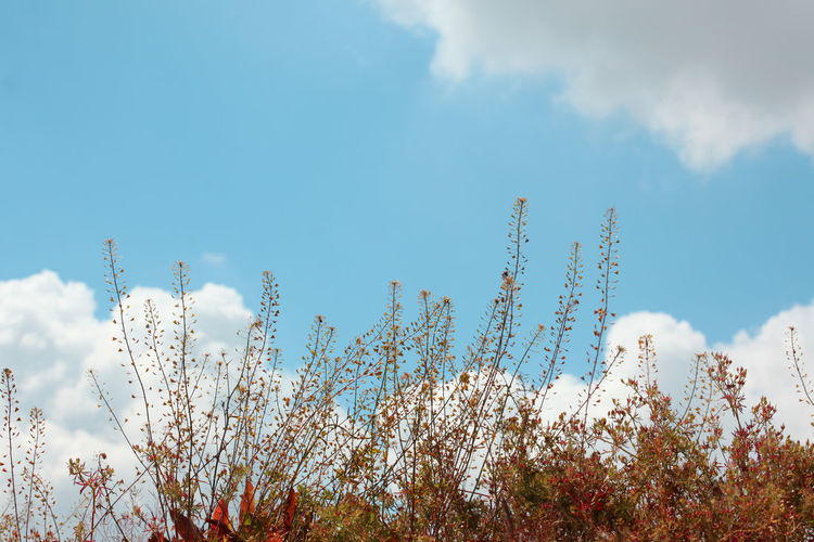Low angle view of flowering plants against sky