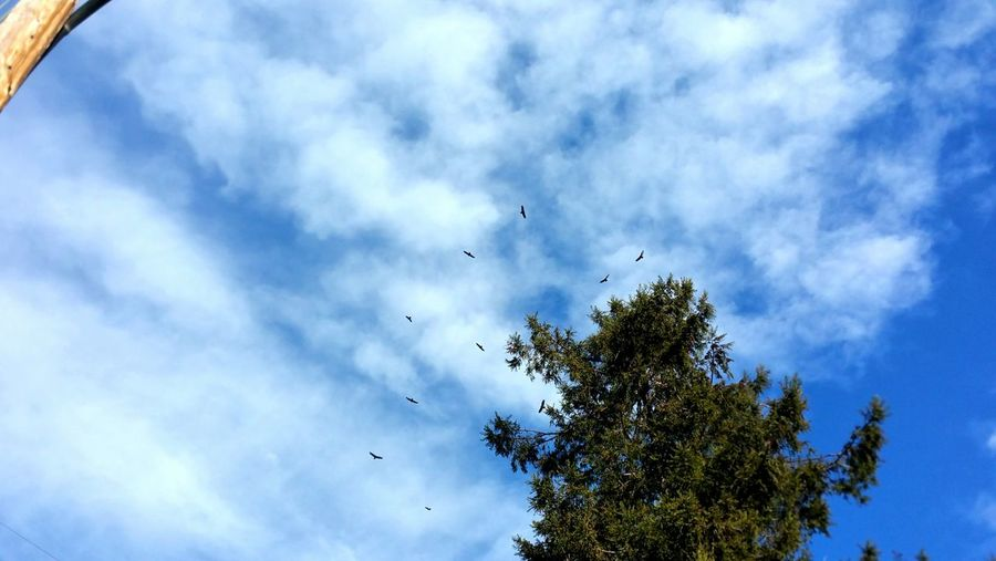 Circling Zen Copy Space Distance Meditation Nature's Colors Peaceful Together Multiple Group Of Birds Blue Sky Cumulus Pattern Wood Pole Anchor Nirvana Contemplating Flying Bird Flock Of Birds Cloud - Sky Low Angle View Mid-air Tree Spread Wings Teamwork Bird Of Prey