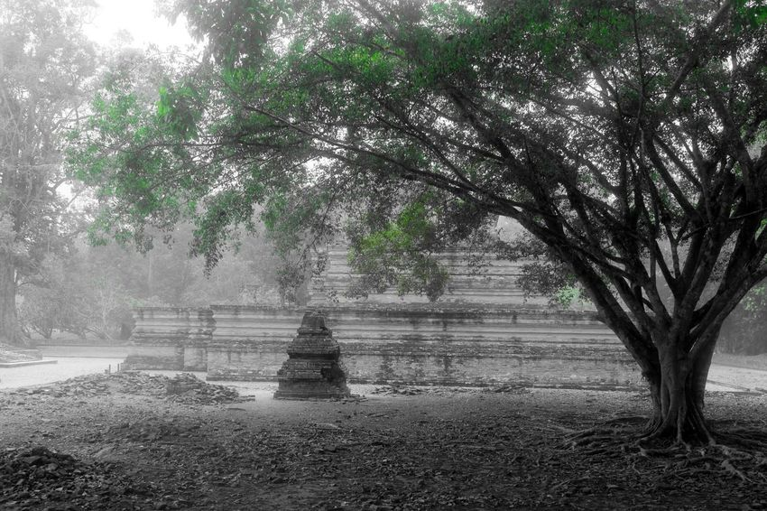 Monochrome Nature Tree Nature_collection Landscape Historical Monuments INDONESIA Jambi Travel Photography