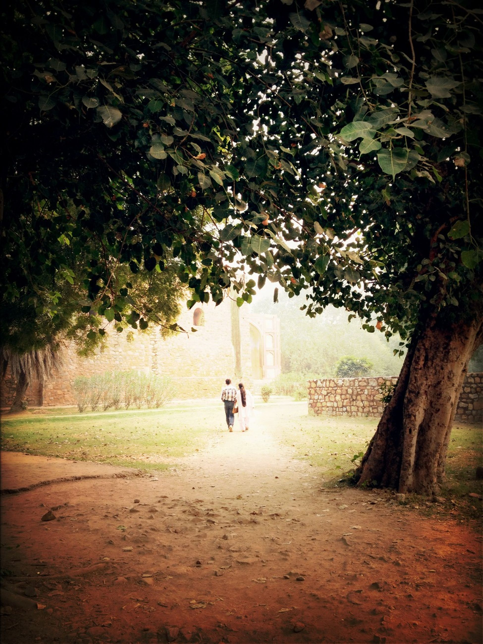 tree, walking, growth, lifestyles, nature, full length, park - man made space, the way forward, men, rear view, footpath, leisure activity, outdoors, tranquility, street, day, motion, person