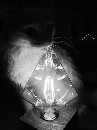 Illuminated light bulb on table