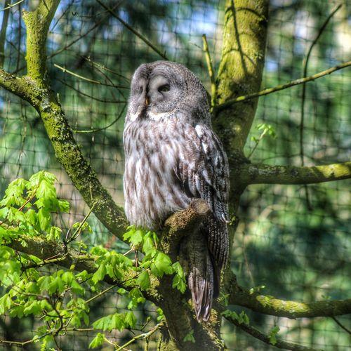 Birdposing Owl Noedit UIL Oehoe @gaiazoo_kerkrade Telephoto Lovelynatureshots DitisLimburg