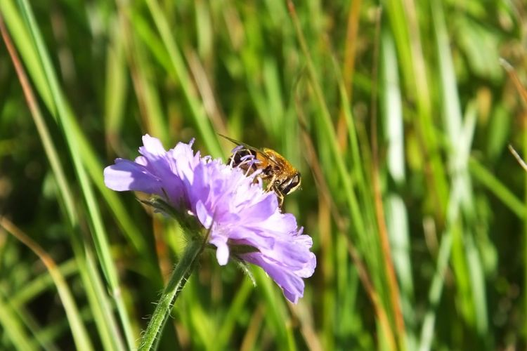 Busy Little Bee Bees Bee Little Small Working Collecting Nectar Flower Wild Flowers Wildflowers Wildflower Countryside