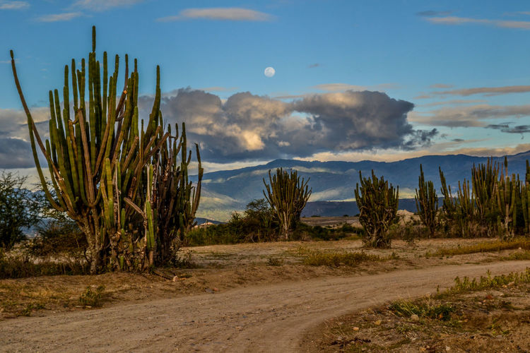 Luna en atardecer. Beauty In Nature Blue Cactus Cloud Cloud - Sky Cloudy Day Field Grass Growth Idyllic Landscape Nature No People Non Urban Scene Non-urban Scene Outdoors Remote Rural Scene Scenics Sky The Way Forward Tranquil Scene Tranquility Tree