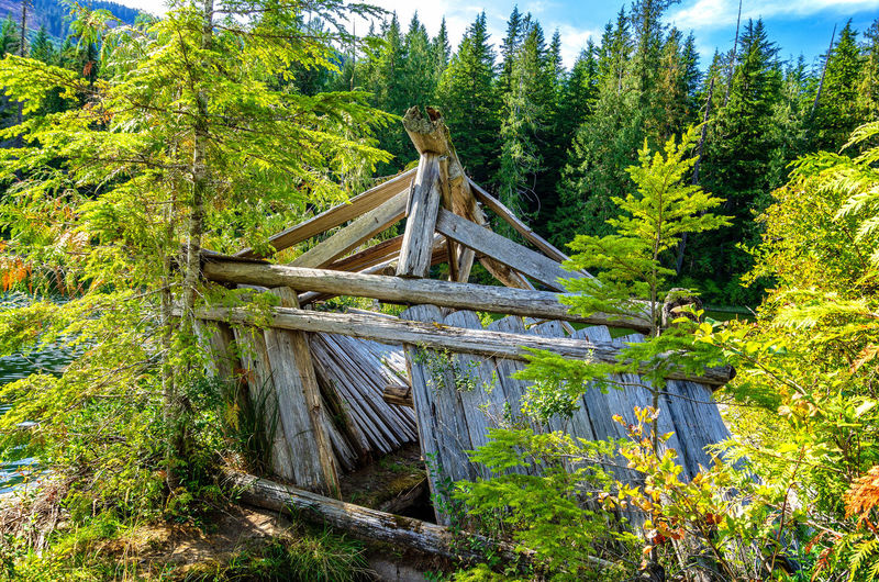 Nimkish Valley near Woss, British Columbia Wood - Material Tree Plant Land Forest Nature Day Green Color Growth Beauty In Nature No People Tranquility Connection Wood Built Structure Bridge Non-urban Scene Architecture Tranquil Scene Outdoors Bridge - Man Made Structure Footbridge Cabin