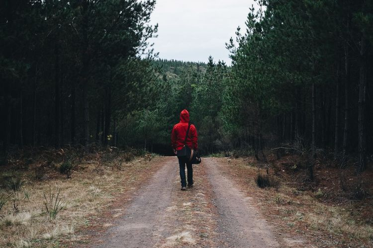 Rear View Of Person In Hooded Shirt Walking In Belanglo State Forest