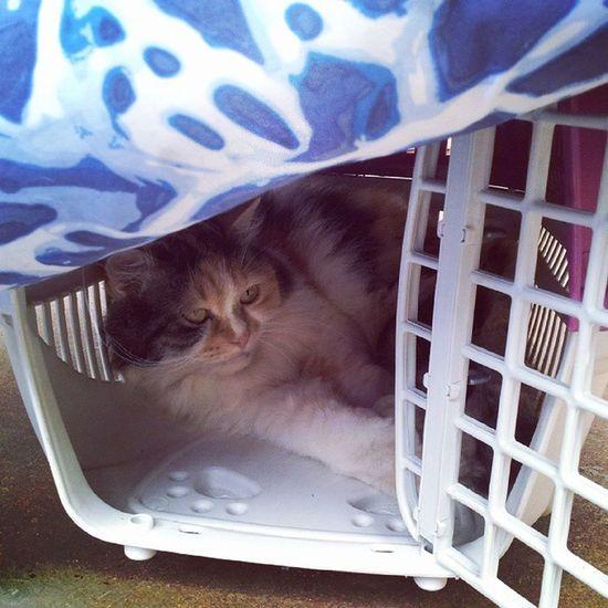 Cats Catstagran Miau Cat Catpic Gatos