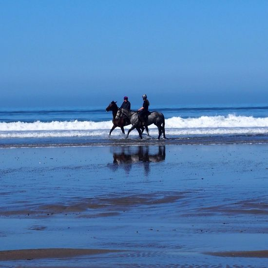 Horses having a dip in the Irish Sea Wales Taking Photos Beach Sea Horses Riding Coastline Pembrokeshire Newgale