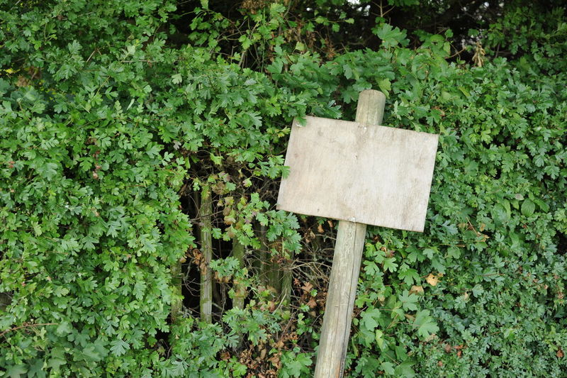 Blank Signboard Against Plants At Park