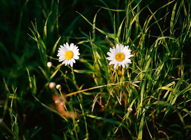 Flowers Mamiya M645 1000s Mamiya 645 Ektar100 Film Photography Film Medium Format Camera Medium Format Outdoor Photography Grass 80mm Two Mamiya 645