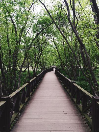 Green And Brown Way Of Trees Gwangju Korea