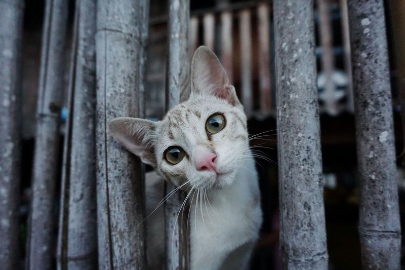 Cat♡ Cats Of EyeEm Animal Animals Cats Thailand