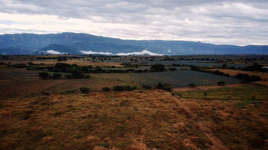 Tequila,jalisco Jalisco Sky Mountain Landscape Environment Cloud - Sky Scenics - Nature Land Beauty In Nature Mountain Range Field Nature Rural Scene