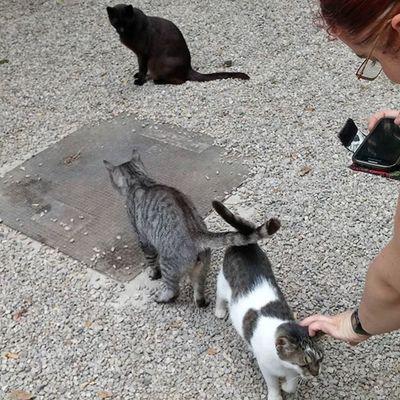 Cats Catsofinstagram Kissat Gatos Chats Streetcats Katukissat Gatoscallejeros Chatsdelarue UB UniversitatdeBarcelona Catlovers Barcelona Bcndreamers Bcnexploradores Bcnexplorers