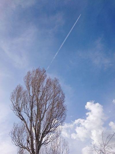 Bulutlu Hava Kavak Ağacı UcakSony Xperia Z3 Cloudy Poplar Tree Airplane