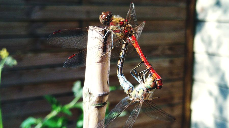 Between angels and insects. Insect Close-up Animal Themes Dragonfly Animal Wing Winged