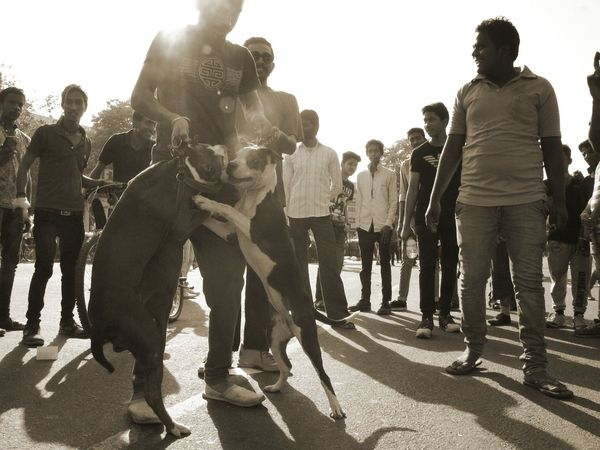 Glitch Capture The Moment Pet Photography  Dog Fight Silhouette Black And White Photography Popular Photos Light And Shadow Mirrorless Delhi