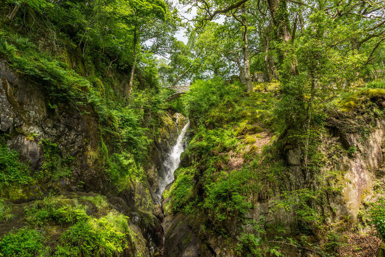Aira Falls Beauty In Nature Day Flowing Flowing Water Green Color Growth Idyllic Lake District Lush Foliage Moss Motion Nature No People Non Urban Scene Outdoors Plant Rock Rock - Object Rock Formation Scenics Tranquil Scene Tranquility Tree Waterfall