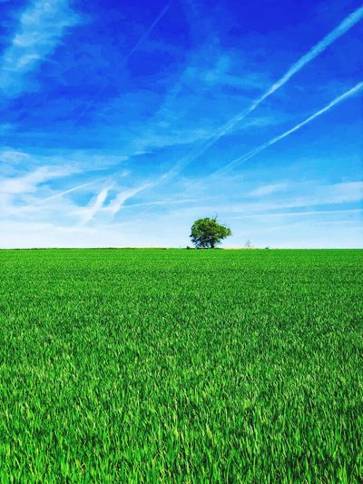 Green Color Plant Sky Field Growth Nature Beauty In Nature Land Landscape Tranquility Environment Rural Scene Scenics - Nature No People Crop  Cloud - Sky Tranquil Scene