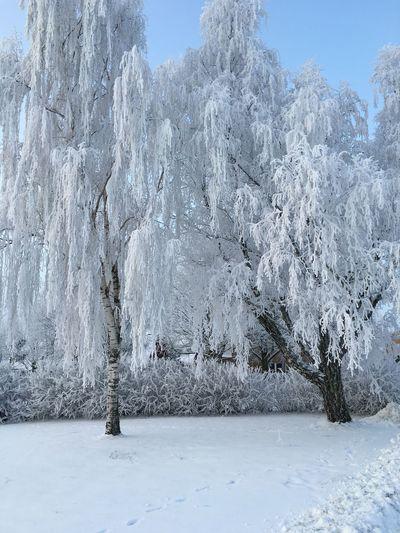 Winter Wonderland Winter Cold Days