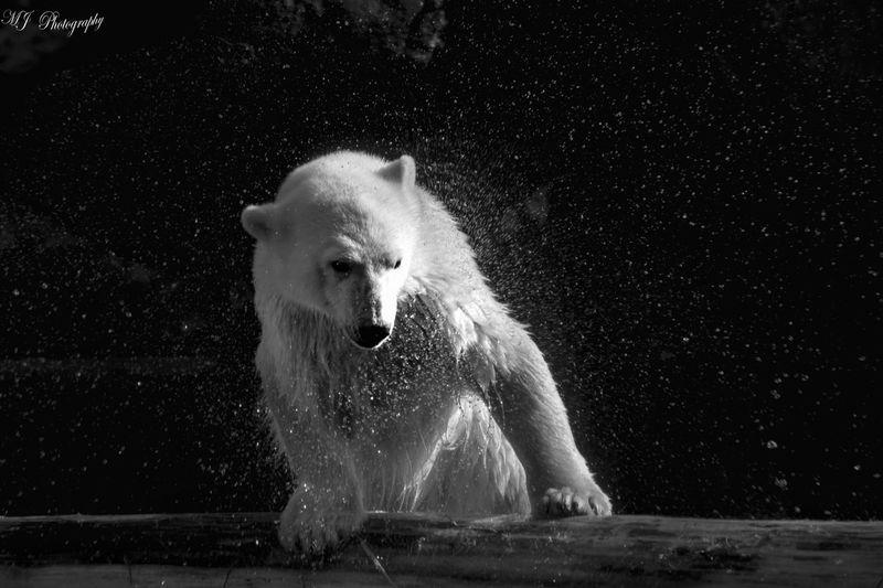 BYOPaper! Polar