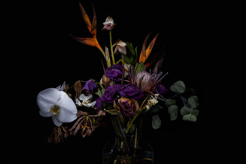 Decaying flowers Dead Flowers In Vase Dry Flowers With Their Shadow Orchid Beauty In Nature Black Background Dark Flowers Decaying Flowers Flower Flower Head Old Flowers Petal Vase