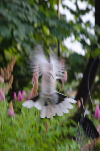 Animal Themes Animal Wildlife Animals In The Wild Beauty In Nature Bird Blurred Motion Capturing Motion Day Flying Motion Nature No People One Animal Outdoors Quorduroy Animal Collection Spread Wings