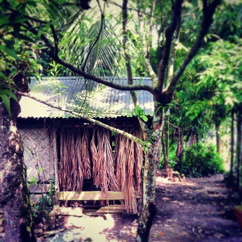 Lilhouse Village Hometown Mehendigonj Barisal ... ♥ Photography ...