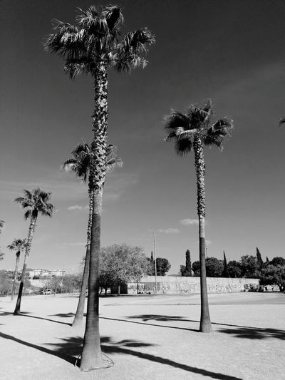 Palm trees by plants in city against sky