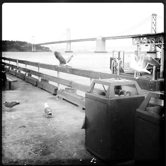 Sail Away, Sail Away The Bay Bridge Sea Gull Hipstamatic