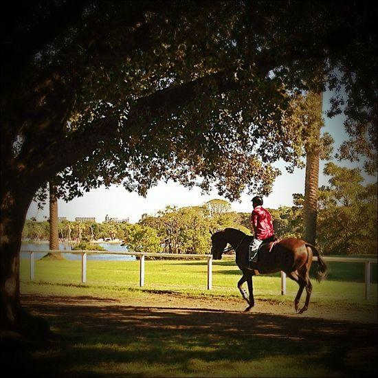 Relaxing Horse Riding Fresh Air