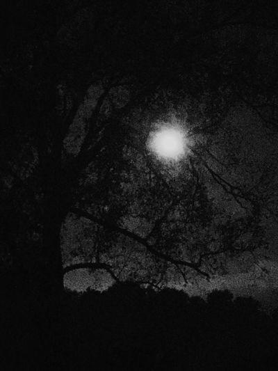 Night Tree Low
