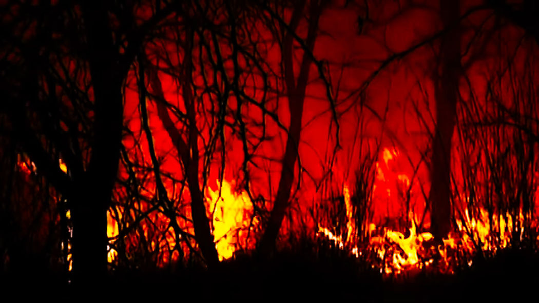 Fire Fire - Natural Phenomenon Fire Maountain Tree Forest Fire Tree Area Forest Red Sky