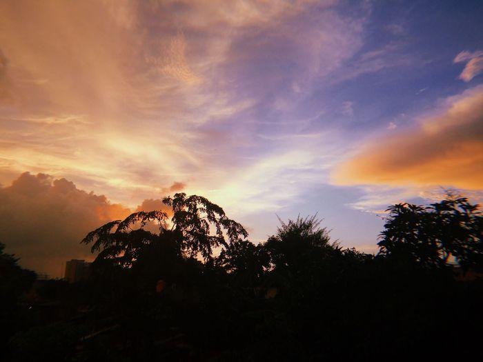 Sky Sky Tree Cloud - Sky Silhouette Plant Sunset Beauty In Nature