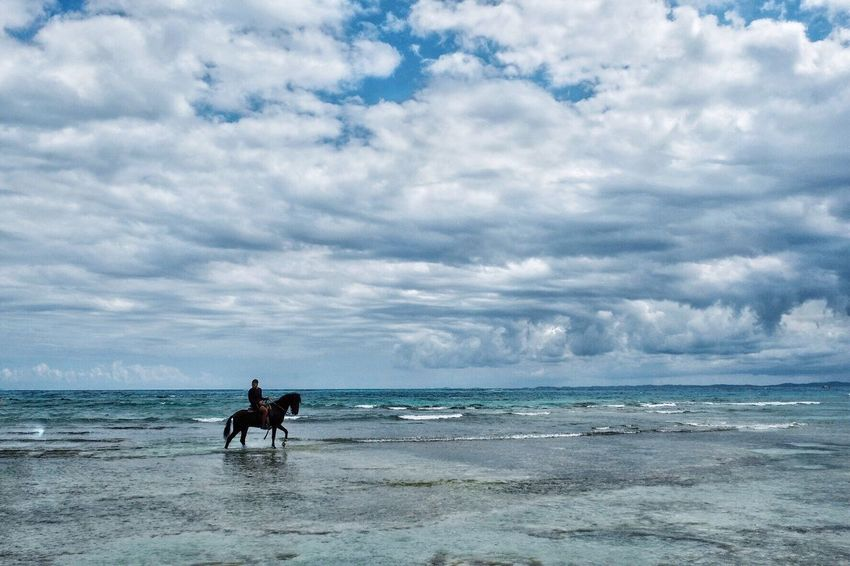 Horseback Beach Beauty In Nature Cloud - Sky Water Horse Nature Outdoors Sea