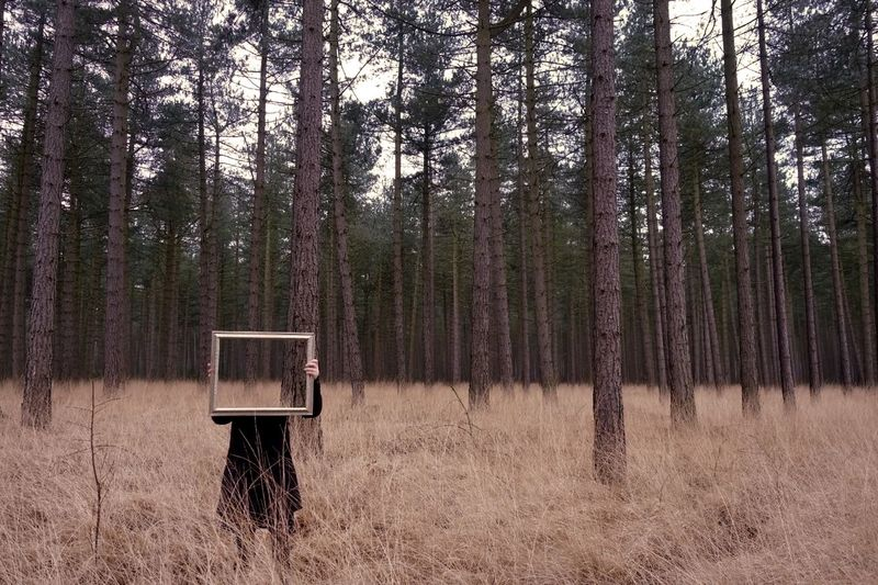Cut And Paste Forest Outdoors Nature Pine Tree Mirror Conceptual The Portraitist - 2017 EyeEm Awards