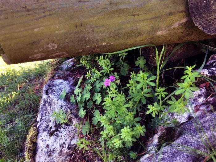 Fiore nella roccia Enego Beatifulday Mountain Sunny Day Flower