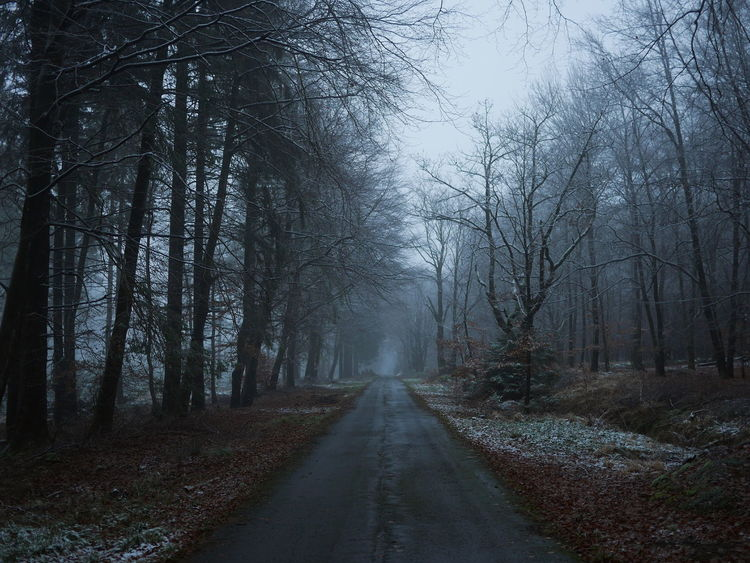 Scenics Road Cinematography Ardennes Tree Forest The Way Forward Fog Outdoors Nature No People Cold Temperature Winter Autumn Beauty In Nature Shades Of Winter