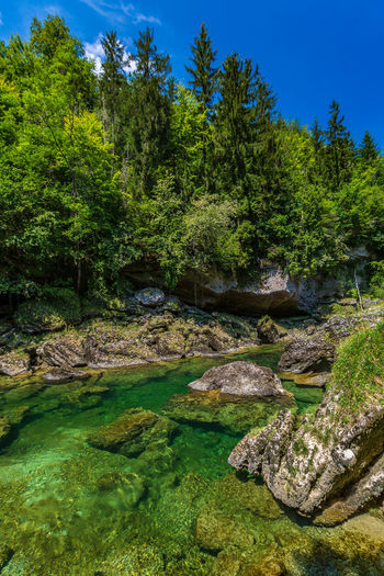 Traunfall Beauty In Nature Day Flowing Flowing Water Forest Green Color Growth Lake Land Nature No People Non-urban Scene Oberösterreich Outdoors Rock Rock - Object Scenics - Nature Solid Stream - Flowing Water Tranquil Scene Tranquility Tree Upperaustria Water