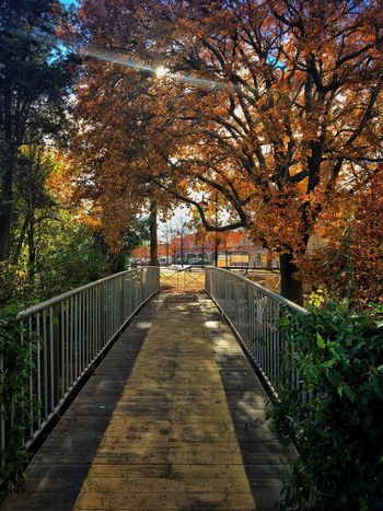 Tree Autumn Railing Nature Change Beauty In Nature The Way Forward Outdoors No People Leaf Day Sunlight Footbridge Branch Architecture Sky