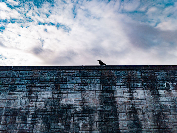 A raven on the stone wall Raven - Bird Crow Silhouette Stone Wall Bird Avian Rook Looking Up Clouds And Sky Grey Sky Wales UK Wildlife Sky Cloud - Sky Architecture Built Structure Perching Fortress Skyline Outline