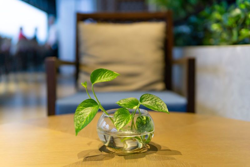 Plant on wood table in coffee shop. Table Leaf Focus On Foreground Wood - Material Refreshment Glass - Material Glass Freshness Close-up Nature Indoors  Cafe Coffee Shop Restaurant Decoration Potted Plant No People Plant Household Equipment Garnish Chair Selective Focus Blurred Background Seat Resting Place
